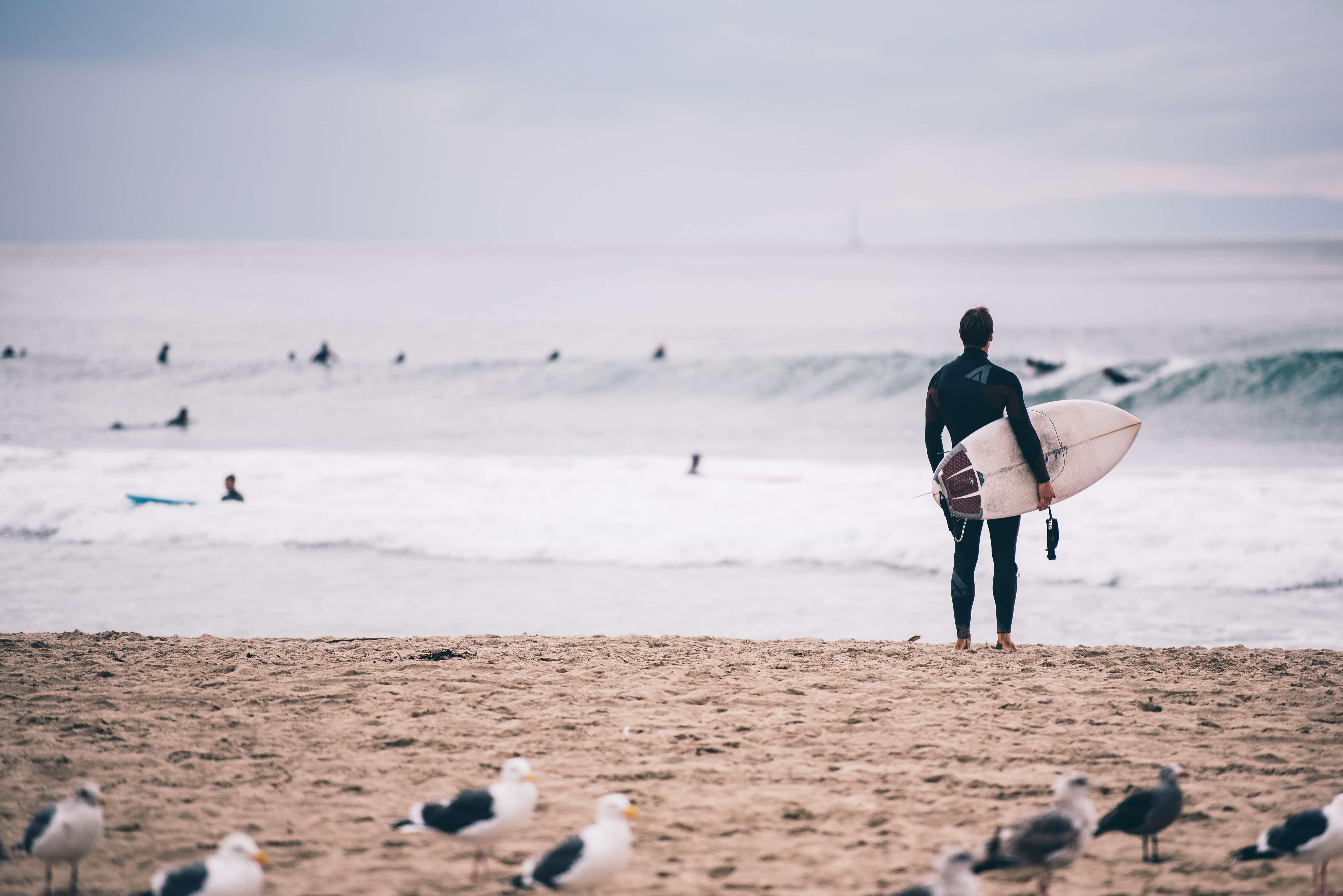 Actie-vogels-surfen